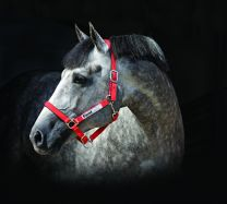 Horseware Field Safe Headcollar