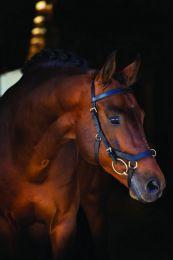 Horseware Rambo Micklem Multi Horse Braun