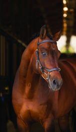 Horseware Rambo Micklem Multi Large Horse Schwarz