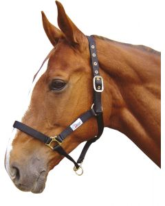 Harry's Horse Halfter Contoller