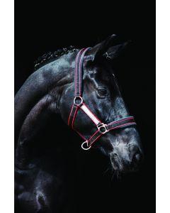 Horseware Rambo gepolstert Headcollar